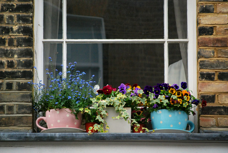 Portobello Road Flowers